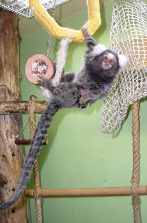Vrste opic